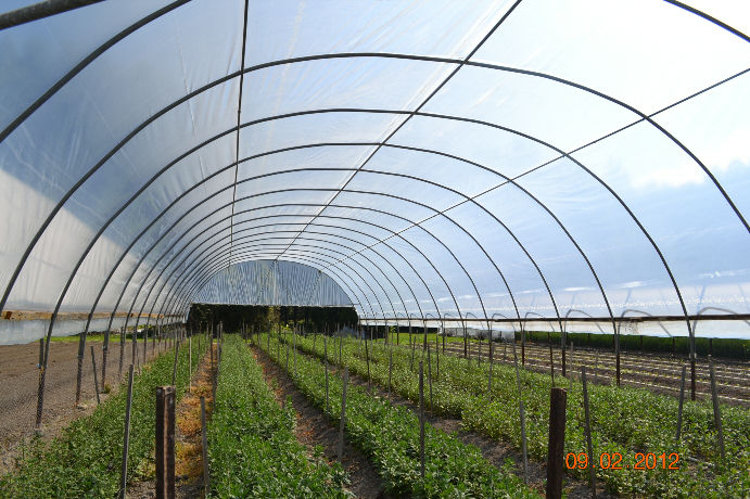 Green House Plastic Hydro Herb Africa